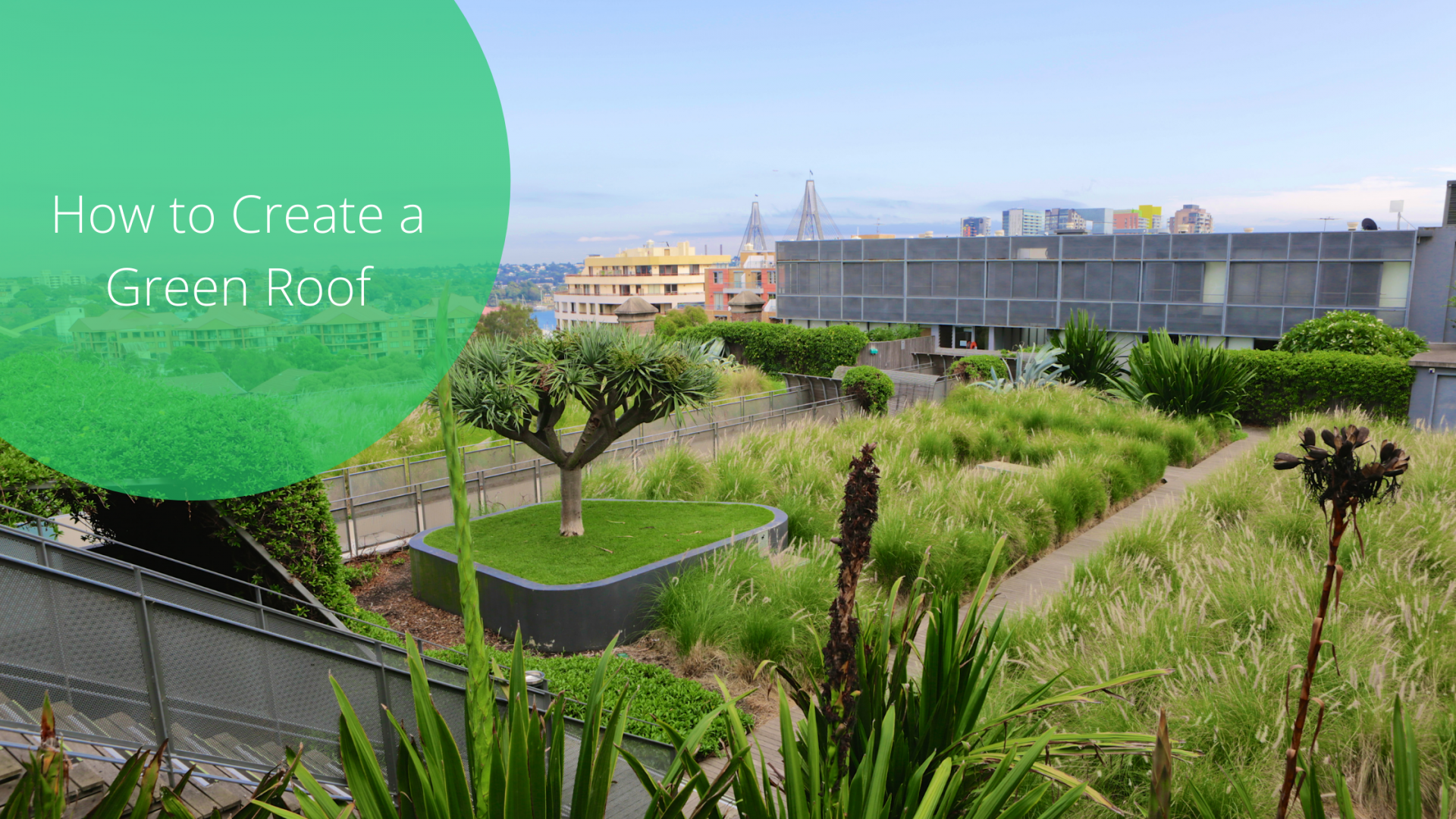 How to Create a Green Roof