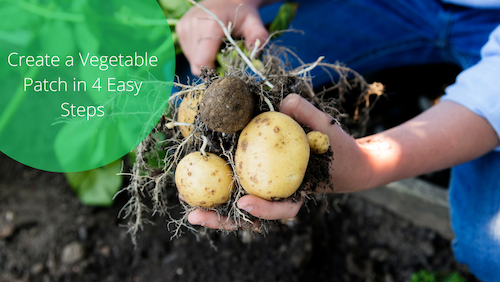 Create A Vegetable Patch In 4 Easy Steps