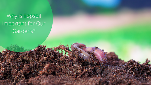 Why Is Topsoil Important For Gardens