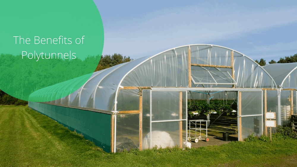 The Benefits Of Polytunnels